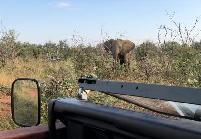 On Safari with Lengau Lodge