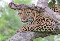 Leopard Rock Guest Lodge