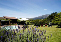 Honeymoon in Constantia Valley