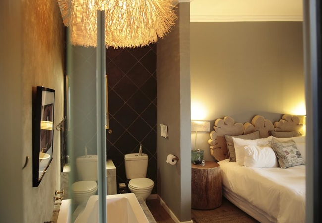 Room Cycad