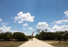 Little Africa Safari Lodge