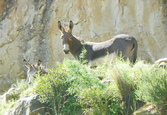 Donkeys in a cave nearby