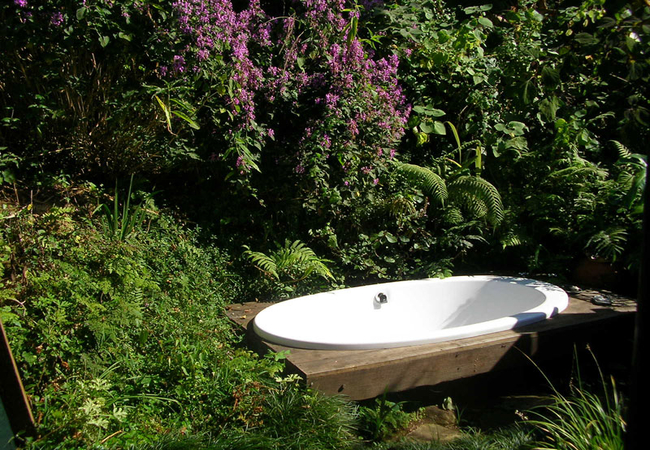 Robin bath in the garden