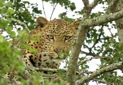 Makongo Hills