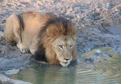Manyeleti Safari Camp