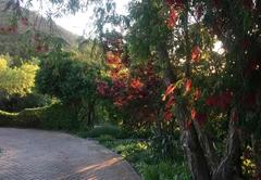 Maple Tree Cottage