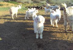 Marlu Farm Stays