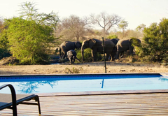 Honeymoon in Valley of the Olifants