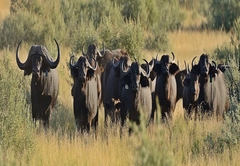 Mattanu Private Game Reserve