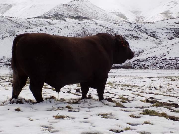 Snowdon Waterfall