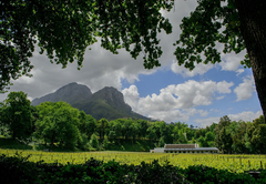 MolenVliet Oosthuizen Family Vineyards