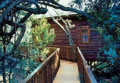 Tree Frog Forest Cabin