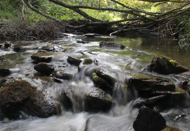 At Whiskey Creek