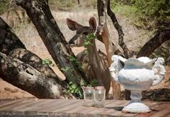 Mvuradona Safari Lodge