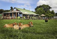 On site Farm Stall - coffee shop & bakery
