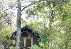 Safari Tent Twin