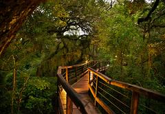 Forest Boardwalks