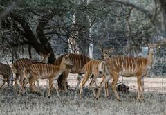 Nyala Game Lodge