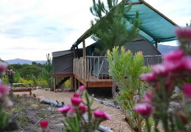 The Springbok Tent
