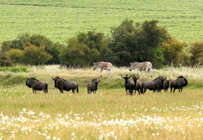 Wildlife on the Estate