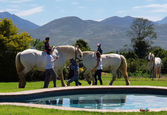 Outeniqua Moon Percheron Stud