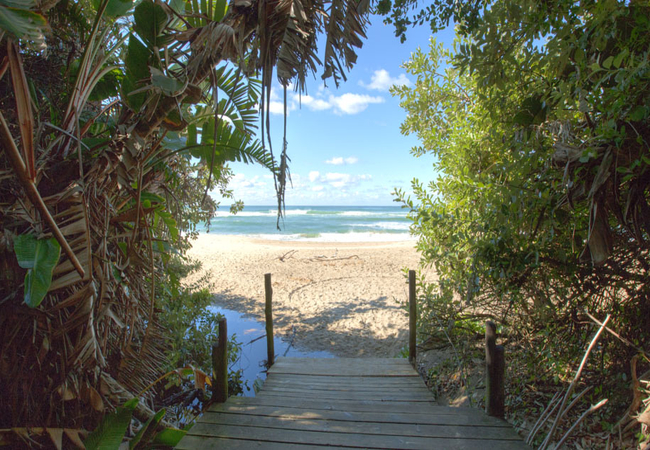 Strelitzia forest and entrance to the Beach