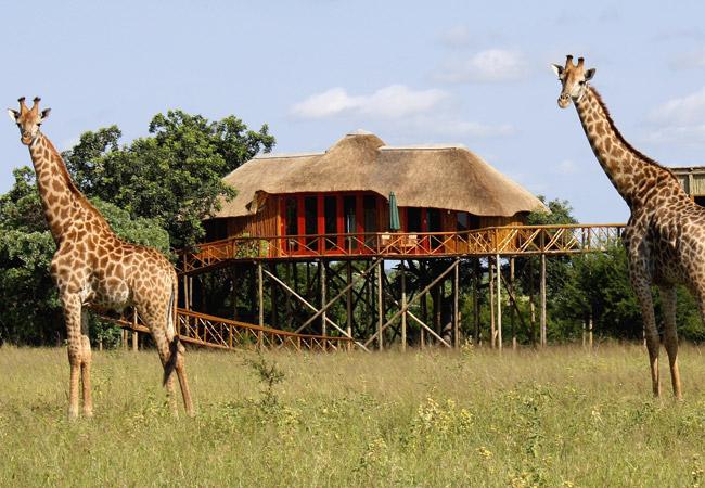 Pezulu Tree House Lodge In Hoedspruit Limpopo