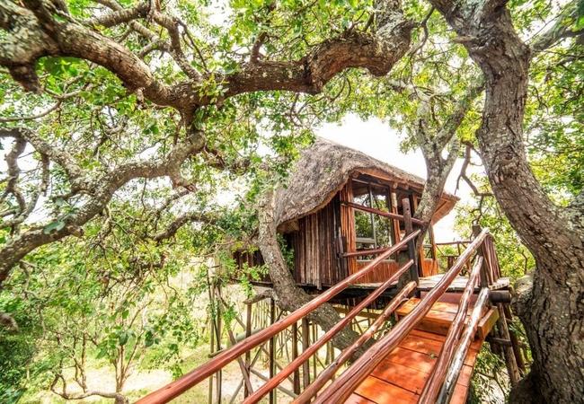 Mountain View Luxury Tree House