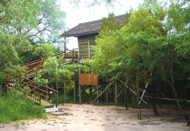 Falsethorn Standard Family Tree House