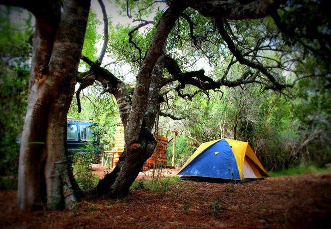 Owl Camp