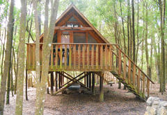 Plett Forest Cabins