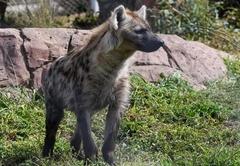 Pumbaa Wildlife Park
