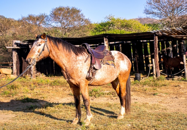 Kune Main Bedroom