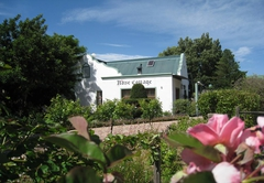 Montagu Rose Cottage