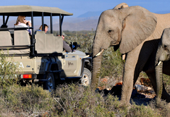 Game Drive & Wildlife