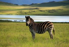 Zebra at Sani Valley Lodges