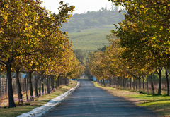 Saxenburg Winery