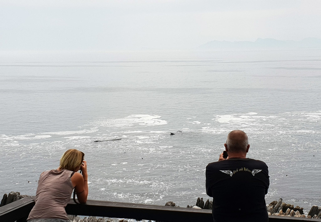Land based whale watching