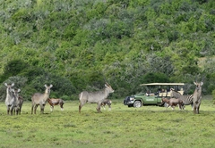 Game Drive