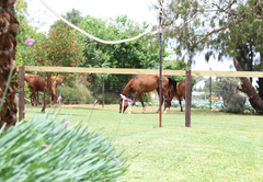 Shortlands Farm Stay