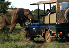 Game drive adventure