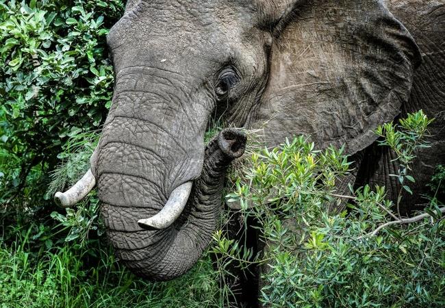 Wildlife at Simbavati