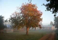 Sneezewood Farm B&B