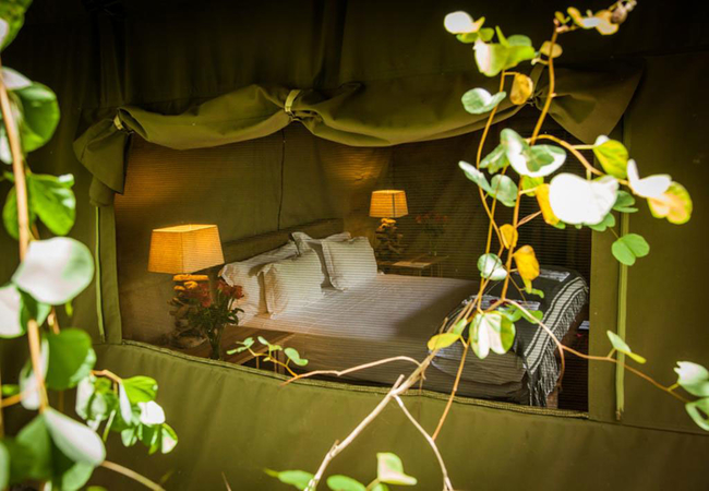 River Tented King Suites