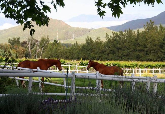 Summerhill Guest Farm