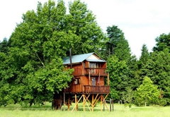 Sycamore Avenue Treehouses