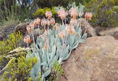 Tenahead Mountain Lodge