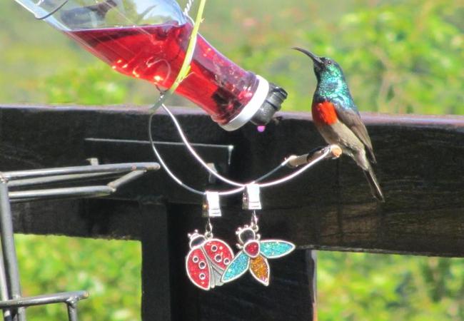 Amazing birdlife