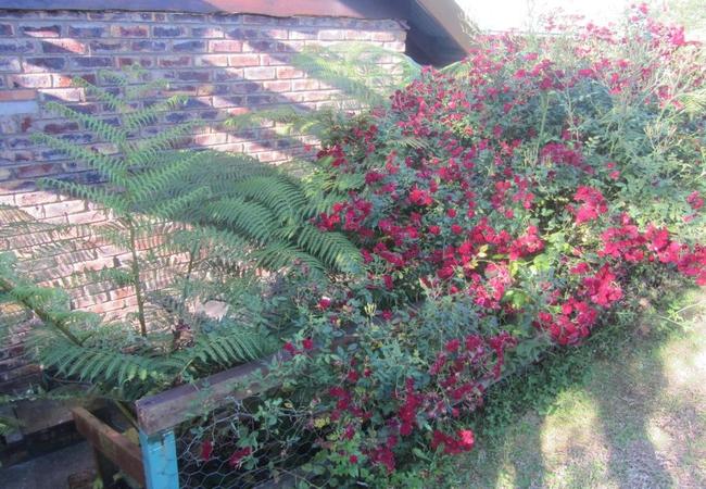 Garden behind cottage