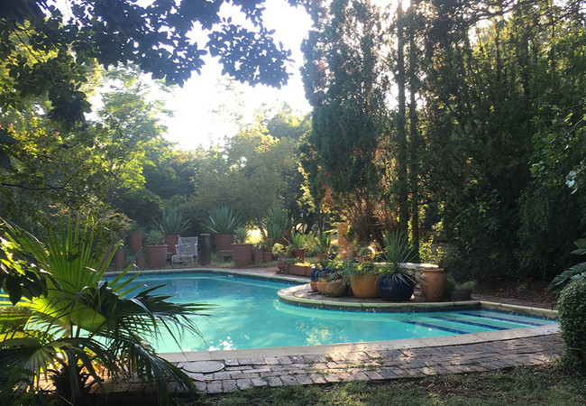 Our lush Garden and Pool